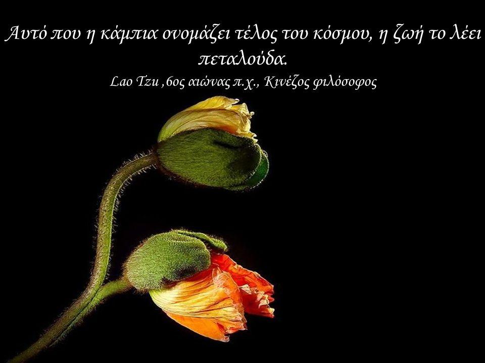 Αυτό που η κάμπια ονομάζει τέλος του κόσμου, η ζωή το λέει πεταλούδα.
