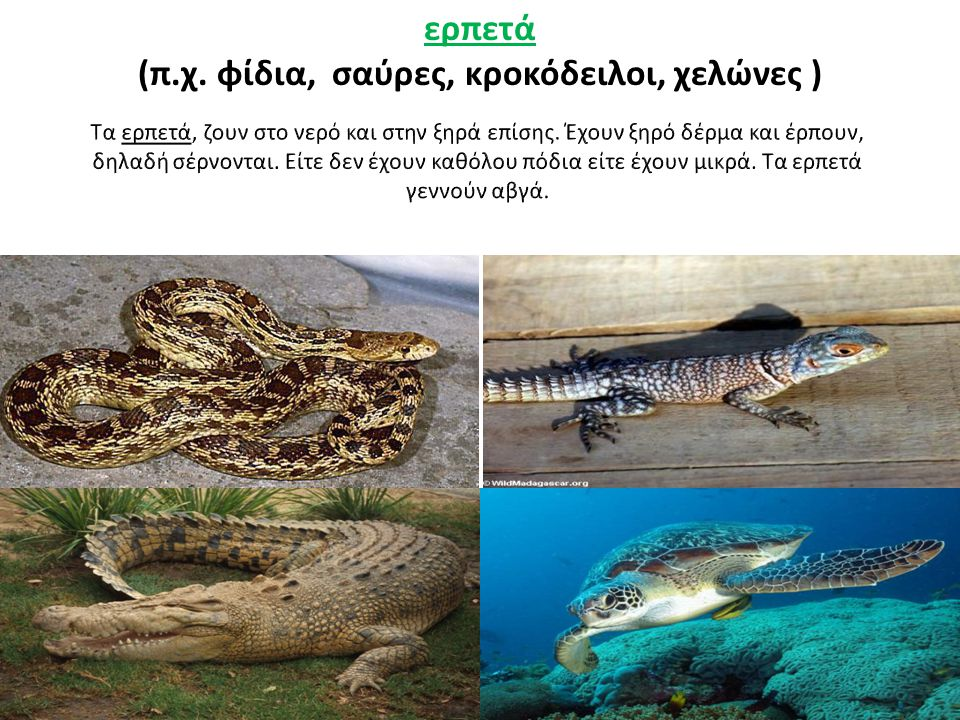 ερπετά (π.χ. φίδια, σαύρες, κροκόδειλοι, χελώνες )