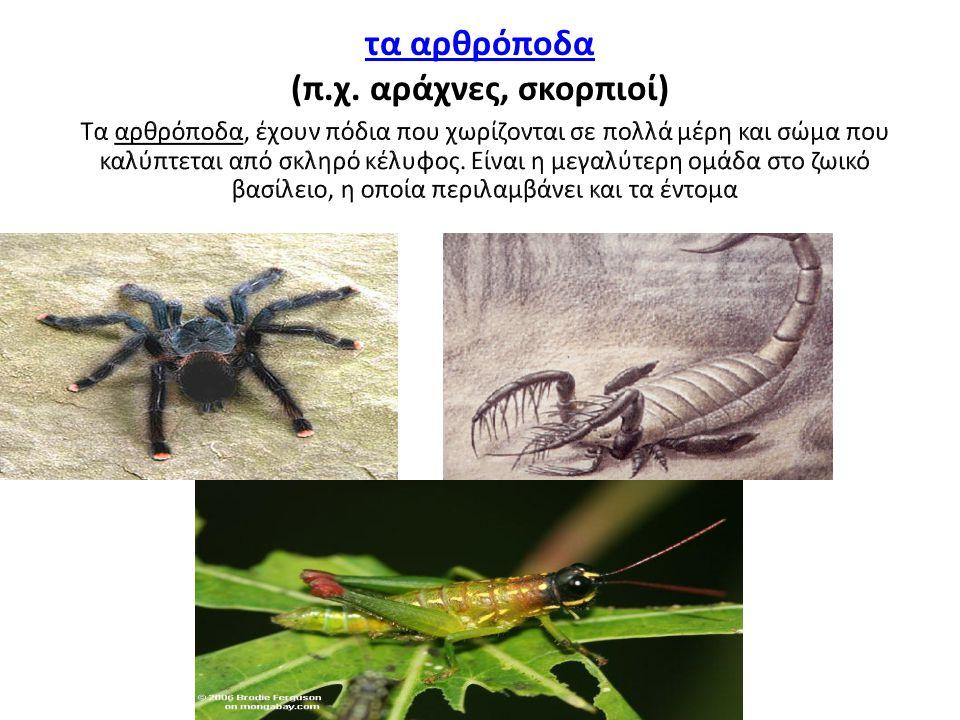 τα αρθρόποδα (π.χ. αράχνες, σκορπιοί)