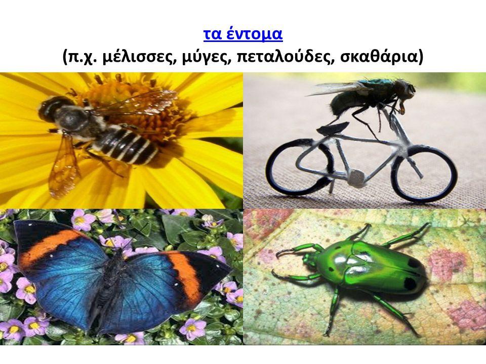 τα έντομα (π.χ. μέλισσες, μύγες, πεταλούδες, σκαθάρια)