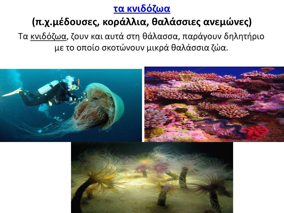 τα κνιδόζωα (π.χ.μέδουσες, κοράλλια, θαλάσσιες ανεμώνες)
