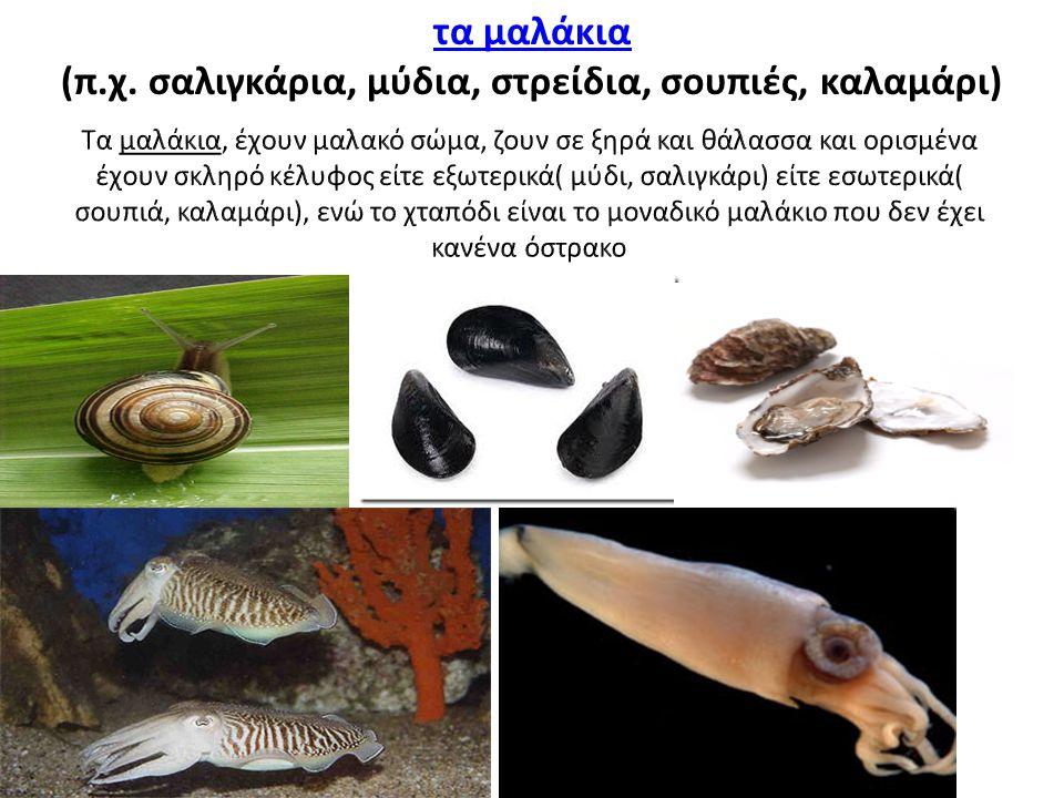 τα μαλάκια (π.χ. σαλιγκάρια, μύδια, στρείδια, σουπιές, καλαμάρι)