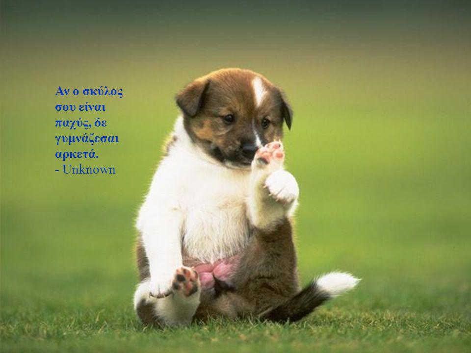 Ο σκύλος μου ανησυχεί για την οικονομία γιατί η Άλπο έχει ανέβει στα 3 δολάρια η κονσέρβα. Αυτό είναι σχεδόν 21 δολάρια σε λεφτά σκύλων. - Joe Weinste