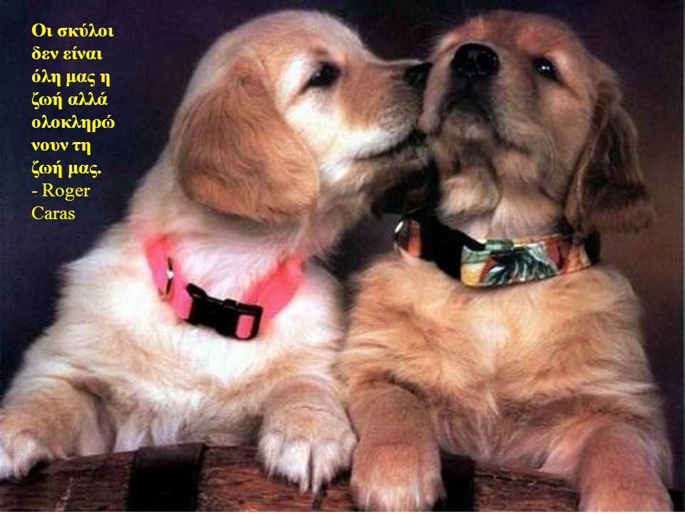Οι σκύλοι αγαπούν τους φίλους τους και δαγκώνουν τους εχθρούς τους, σε αντίθεση με τους ανθρώπους, που είναι ανίκανοι για ατόφια αγάπη και πάντα πρέπε