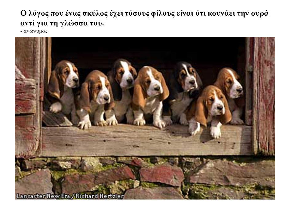 Οι σκύλοι δεν είναι όλη μας η ζωή αλλά ολοκληρώ νουν τη ζωή μας. - Roger Caras