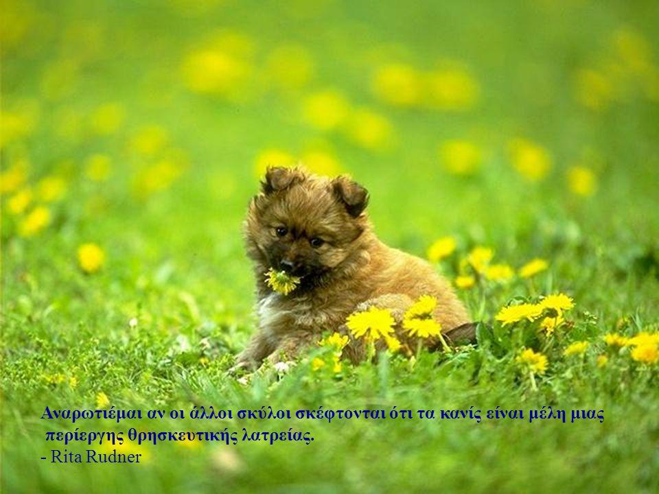 Μην δέχεσαι το θαυμασμό του σκύλου σου σαν αποκλειστική απόδειξη του πόσο υπέροχος είσαι. - Ann Landers
