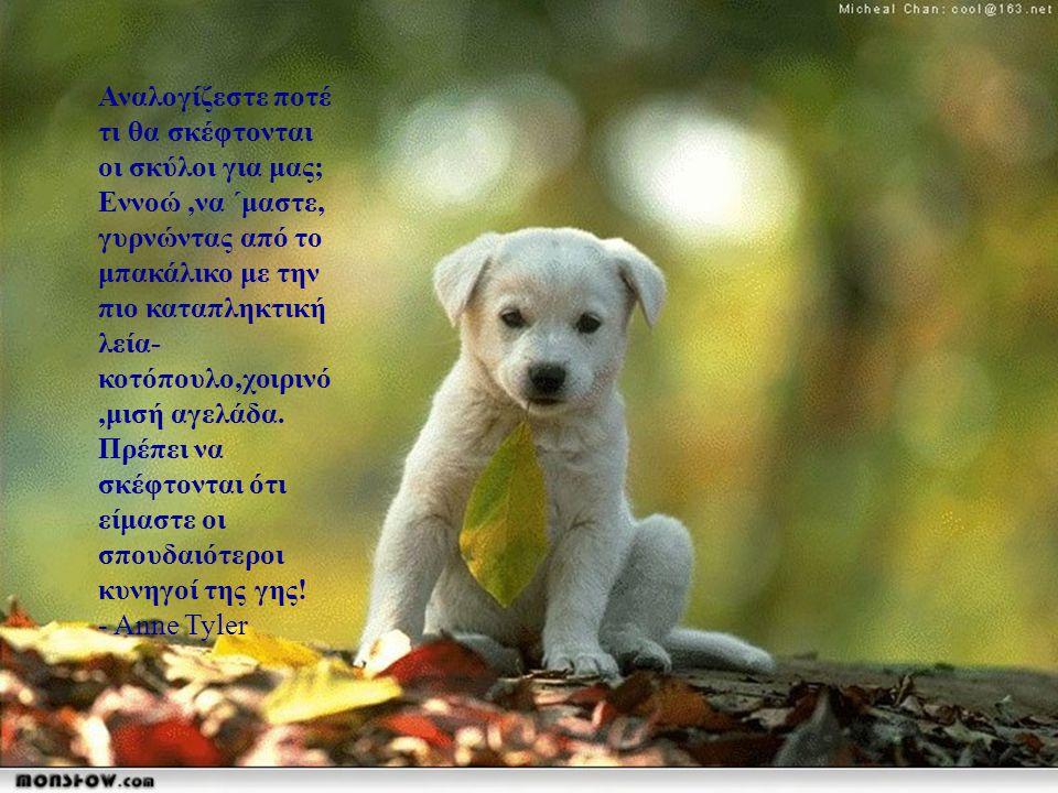 Αναρωτιέμαι αν οι άλλοι σκύλοι σκέφτονται ότι τα κανίς είναι μέλη μιας περίεργης θρησκευτικής λατρείας. - Rita Rudner