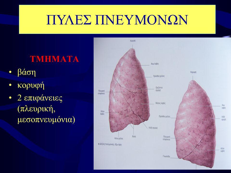 ΤΜΗΜΑΤΑ •βάση •κορυφή •2 επιφάνειες (πλευρική, μεσοπνευμόνια) ΠΥΛΕΣ ΠΝΕΥΜΟΝΩΝ