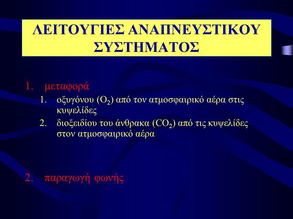 Εντός του βρογχοπνευμονικού τμήματος ο κάθε τμηματικός βρόγχος διακλαδίζεται σε μικρότερους (1mm), τους λοβιακούς Λοβιακοί βρόγχοι (δ ιανέμουν αέρα στο Πνευμονικό λοβίο) Ενδολόβιο Αναπνευστικοί (κυψελιδικοί σάκοι) ΠΝΕΥΜΟΝΙΚΟ ΛΟΒΙΟ