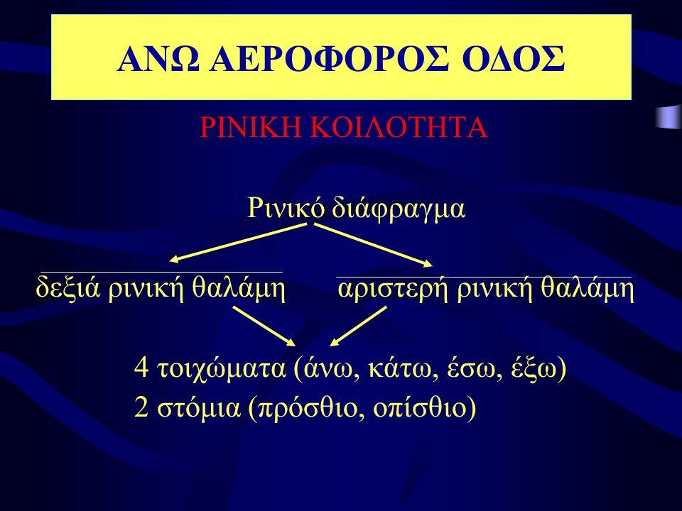 ΡΙΝΙΚΗ ΚΟΙΛΟΤΗΤΑ Ρινικό διάφραγμα δεξιά ρινική θαλάμη αριστερή ρινική θαλάμη 4 τοιχώματα (άνω, κάτω, έσω, έξω) 2 στόμια (πρόσθιο, οπίσθιο) ΑΝΩ ΑΕΡΟΦΟΡ