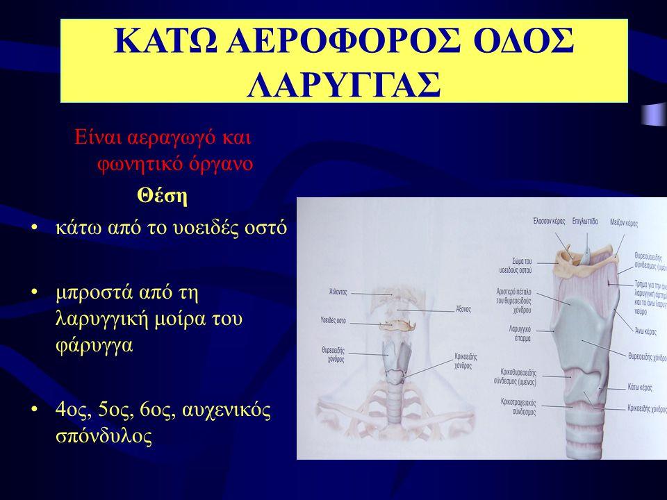 Αποτελείται από •χόνδρους •μύες •βλεννογόνο ( πτυχές του φωνητικά χείλη)