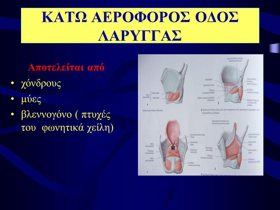 Είναι αεροφόρος αγωγός και αποτελείται από •συνδετικό ιστό •χόνδρινα ημικρίκια (20) •εσωτερικά, επιθήλιο με κροσσούς το οποίο σε καπνιστές μπορεί να μετατραπεί σε πλακώδες (προκαρκινοματώδης κατάσταση) ΚΑΤΩ ΑΕΡΟΦΟΡΟΣ ΟΔΟΣ ΤΡΑΧΕΙΑ
