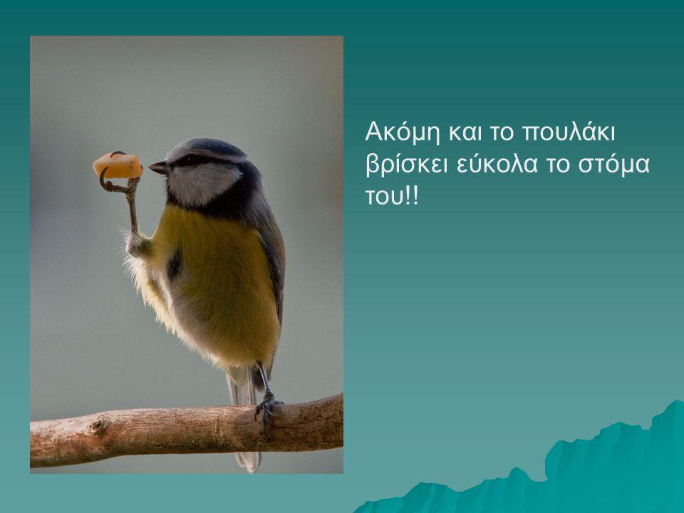 Ακόμη και το πουλάκι βρίσκει εύκολα το στόμα του!!
