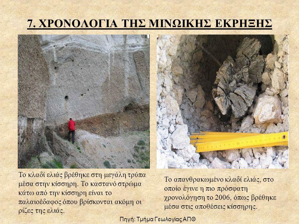 7.ΧΡΟΝΟΛΟΓΙΑ ΤΗΣ ΜΙΝΩΙΚΗΣ ΕΚΡΗΞΗΣ Το κλαδί ελιάς βρέθηκε στη μεγάλη τρύπα μέσα στην κίσσηρη.
