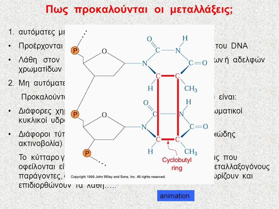 Πως προκαλούνται οι μεταλλάξεις; 1.αυτόματες μεταλλάξεις •Προέρχονται από λάθη που γίνονται στην αντιγραφή του DNA •Λάθη στον διαχωρισμό των ομολόγων χρωμοσωμάτων ή αδελφών χρωματίδων στα διάφορα στάδια της μείωσης 2.Μη αυτόματες μεταλλάξεις Προκαλούνται από μεταλλαξογόνους παράγοντες, που είναι: •Διάφορες χημικές ουσίες( φορμαλδεΰδη, χρωστικές, αρωματικοί κυκλικοί υδρογονάνθρακες, καφεΐνη, κ.ά) •Διάφοροι τύποι ακτινοβολιών ( ακτίνες γ, ακτίνες Χ, υπεριώδης ακτινοβολία) Το κύτταρο για να αντιμετωπίσει γονιδιακές μεταλλάξεις που οφείλονται είτε σε λάθη κατά την αντιγραφή είτε σε μεταλλαξογόνους παράγοντες, διαθέτει πάρα πολλά ένζυμα που αναγνωρίζουν και επιδιορθώνουν τα λάθη…..