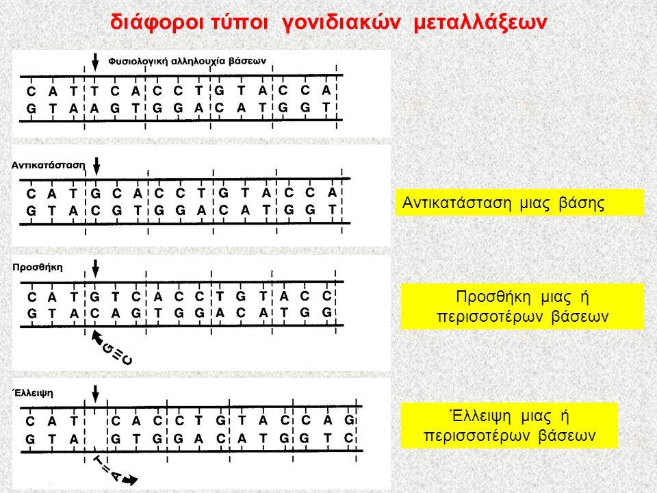 διάφοροι τύποι γονιδιακών μεταλλάξεων Αντικατάσταση μιας βάσης Προσθήκη μιας ή περισσοτέρων βάσεων Έλλειψη μιας ή περισσοτέρων βάσεων
