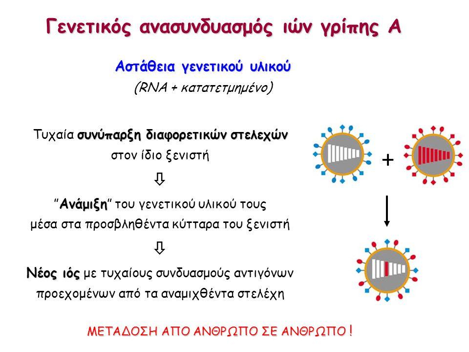 Αιμοσυγκολλητίνη (H) Γονιδιακή θέση 226 Λευκίνη α-(2,6)σιαλικό (άνθρωπος) Γλουταμίνη α-(2,3)σιαλικό (πτηνά) Χοίρος: αμφότεροι οι υποδοχείς Πιθανός ανασυνδυασμός π.χ.