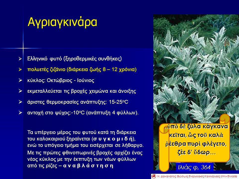  Ελληνικό φυτό (ξηροθερμικές συνθήκες)  πολυετές ζιζάνιο (διάρκεια ζωής 8 – 12 χρόνια)  κύκλος: Οκτώβριος - Ιούνιος  εκμεταλλεύεται τις βροχές χει