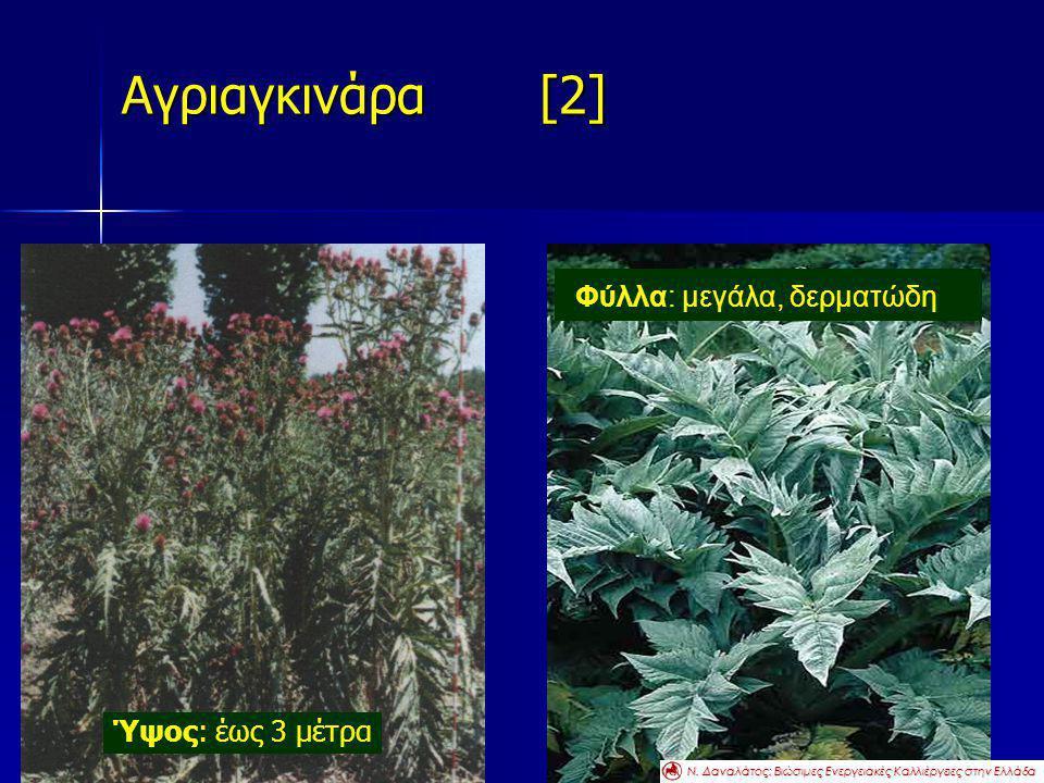 Αγριαγκινάρα [2] Ύψος: έως 3 μέτρα Φύλλα: μεγάλα, δερματώδη Ν. Δαναλάτος: Βιώσιμες Ενεργειακές Καλλιέργειες στην Ελλάδα