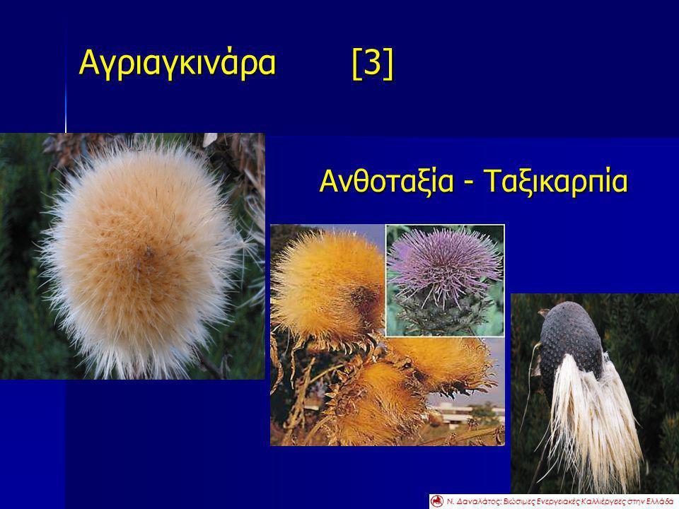 Αγριαγκινάρα [3] Ανθοταξία - Ταξικαρπία Ν. Δαναλάτος: Βιώσιμες Ενεργειακές Καλλιέργειες στην Ελλάδα