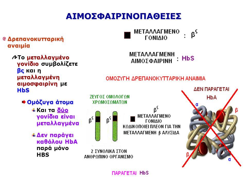 Δρεπανοκυτταρική αναιμία μεταλλαγμένο γονίδιο βς μεταλλαγμένη αιμοσφαιρίνηΗbS Το μεταλλαγμένο γονίδιο συμβολίζετε βς και η μεταλλαγμένη αιμοσφαιρίνη με ΗbS Ετερόζυγα άτομα ένα γονίδιο φυσιολογικό β άλλο μεταλλαγμένο βς παράγουν HbA δεν εμφανίζουν τα συμπτώματα Το ένα γονίδιο είναι φυσιολογικό β και το άλλο μεταλλαγμένο βς άρα παράγουν HbA και δεν εμφανίζουν τα συμπτώματα ασθένειας φορείς προκαλείτε δρεπάνωσημόνο σε συνθήκες μεγάλης έλλειψης οξυγόνου Στους φορείς προκαλείτε δρεπάνωση μόνο σε συνθήκες μεγάλης έλλειψης οξυγόνου σε υψόμετρο πάνω από 3.000m ΑΙΜΟΣΦΑΙΡΙΝΟΠΑΘΕΙΕΣ
