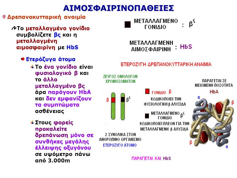 Δρεπανοκυτταρική αναιμία μεταλλαγμένο γονίδιο βς μεταλλαγμένη αιμοσφαιρίνηΗbS Το μεταλλαγμένο γονίδιο συμβολίζετε βς και η μεταλλαγμένη αιμοσφαιρίνη μ