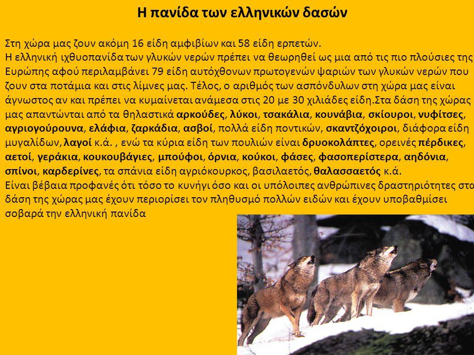 Η πανίδα των ελληνικών δασών Στη χώρα μας ζουν ακόμη 16 είδη αμφιβίων και 58 είδη ερπετών. Η ελληνική ιχθυοπανίδα των γλυκών νερών πρέπει να θεωρηθεί