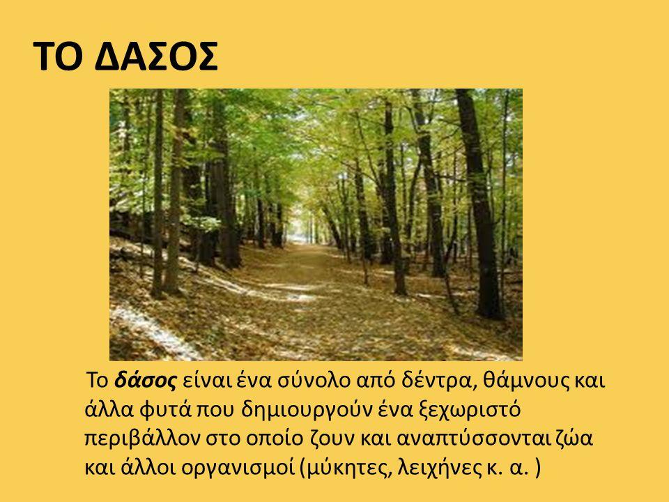 ΤΟ ΔΑΣΟΣ Το δάσος είναι ένα σύνολο από δέντρα, θάμνους και άλλα φυτά που δημιουργούν ένα ξεχωριστό περιβάλλον στο οποίο ζουν και αναπτύσσονται ζώα και