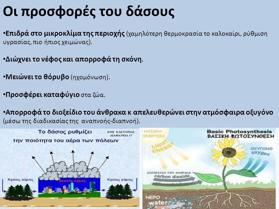 Οι προσφορές του δάσους • Επιδρά στο μικροκλίμα της περιοχής (χαμηλότερη θερμοκρασία το καλοκαίρι, ρύθμιση υγρασίας, πιο ήπιος χειμώνας). • Διώχνει το
