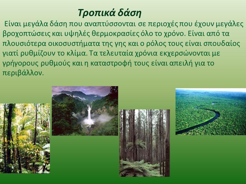 Τροπικά δάση Είναι μεγάλα δάση που αναπτύσσονται σε περιοχές που έχουν μεγάλες βροχοπτώσεις και υψηλές θερμοκρασίες όλο το χρόνο. Είναι από τα πλουσιό