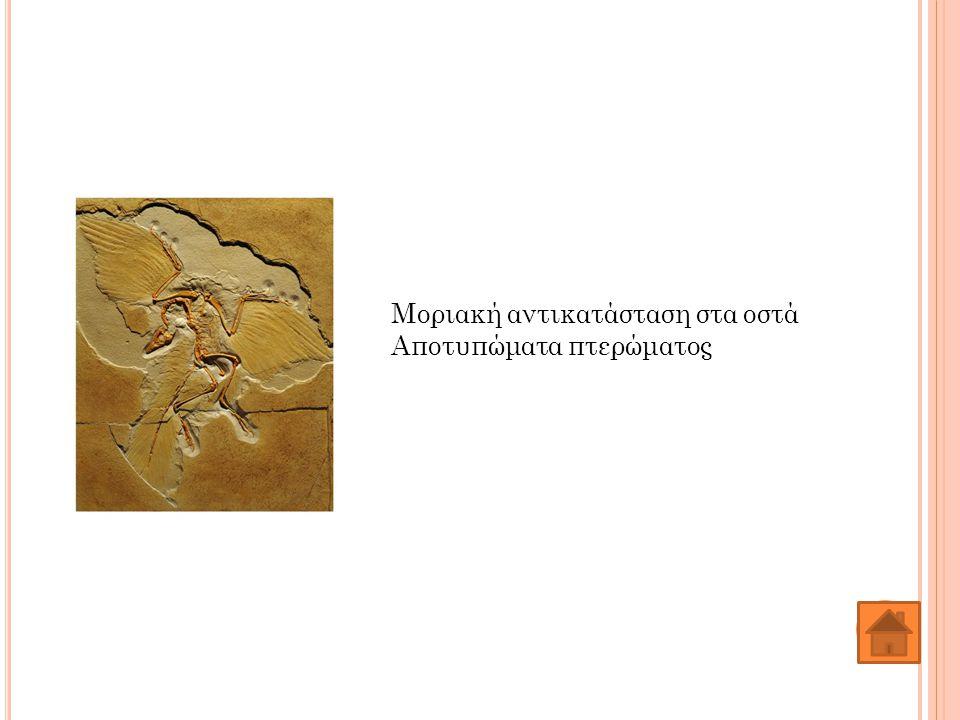 Μοριακή αντικατάσταση στα οστά Αποτυπώματα πτερώματος