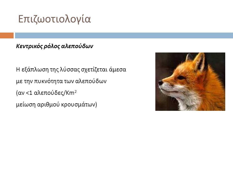 Επιζωοτιολογία Κεντρικός ρόλος αλεπούδων Η εξάπλωση της λύσσας σχετίζεται άμεσα με την πυκνότητα των αλεπούδων (αν <1 αλεπούδες/Km 2 μείωση αριθμού κρ