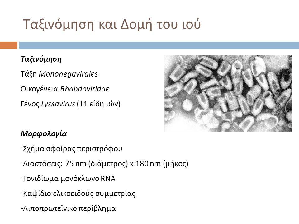 Ταξινόμηση Τάξη Mononegavirales Οικογένεια Rhabdoviridae Γένος Lyssavirus (11 είδη ιών) Μορφολογία -Σχήμα σφαίρας περιστρόφου -Διαστάσεις: 75 nm (διάμ