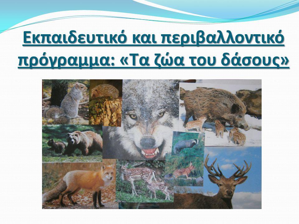 Τα ζώα του δάσους  Το δάσος είναι το βασίλειο των μεγάλων δέντρων και των θάμνων, των μανιταριών και των άγριων καρπών.