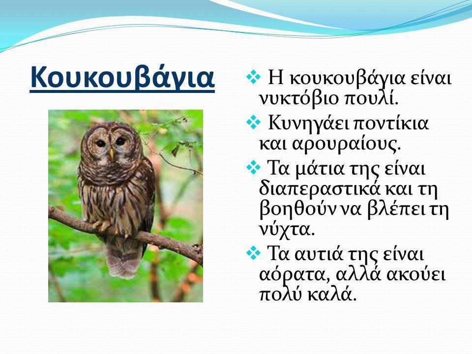 Κουκουβάγια  Η κουκουβάγια είναι νυκτόβιο πουλί.  Κυνηγάει ποντίκια και αρουραίους.  Τα μάτια της είναι διαπεραστικά και τη βοηθούν να βλέπει τη νύ