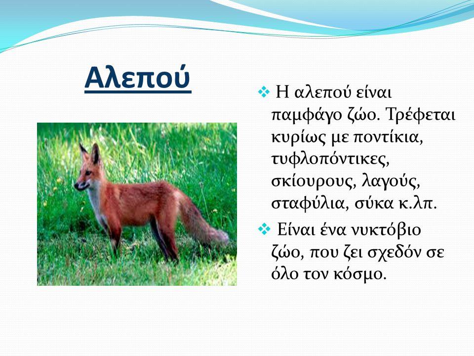 Αλεπού  Η αλεπού είναι παμφάγο ζώο. Τρέφεται κυρίως με ποντίκια, τυφλοπόντικες, σκίουρους, λαγούς, σταφύλια, σύκα κ.λπ.  Είναι ένα νυκτόβιο ζώο, που