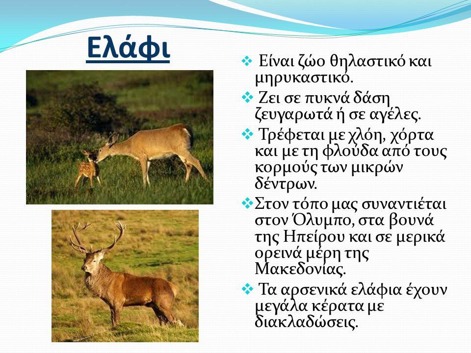 Ελάφι  Είναι ζώο θηλαστικό και μηρυκαστικό.  Ζει σε πυκνά δάση ζευγαρωτά ή σε αγέλες.  Τρέφεται με χλόη, χόρτα και με τη φλούδα από τους κορμούς τω
