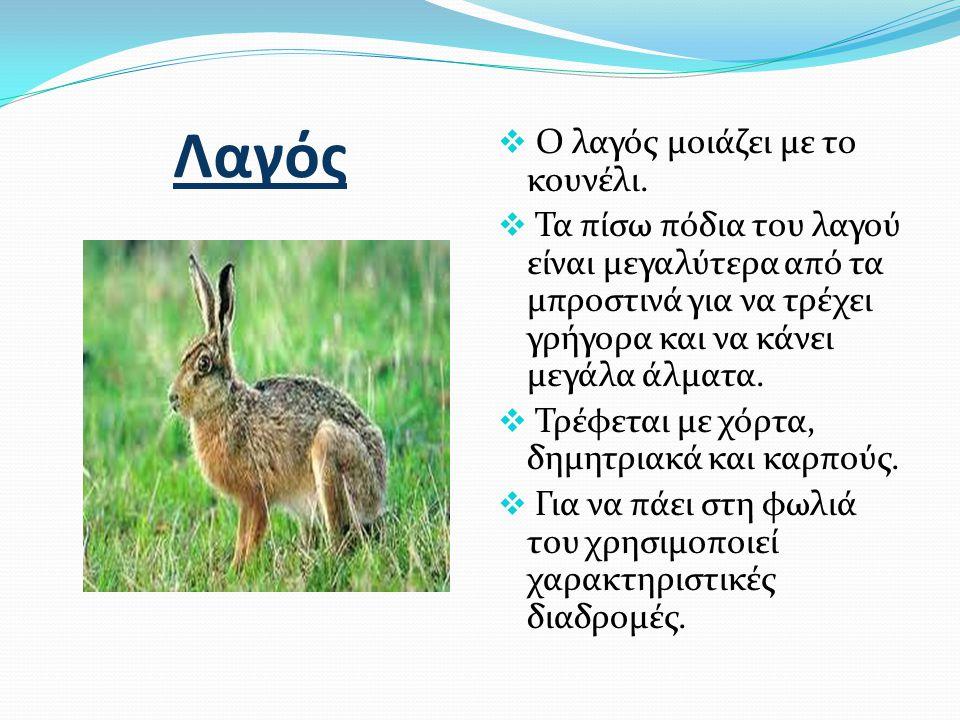 Σκίουρος  Ο σκίουρος είναι μικρό και ευκίνητο ζώο, που ζει κυρίως στα δέντρα.