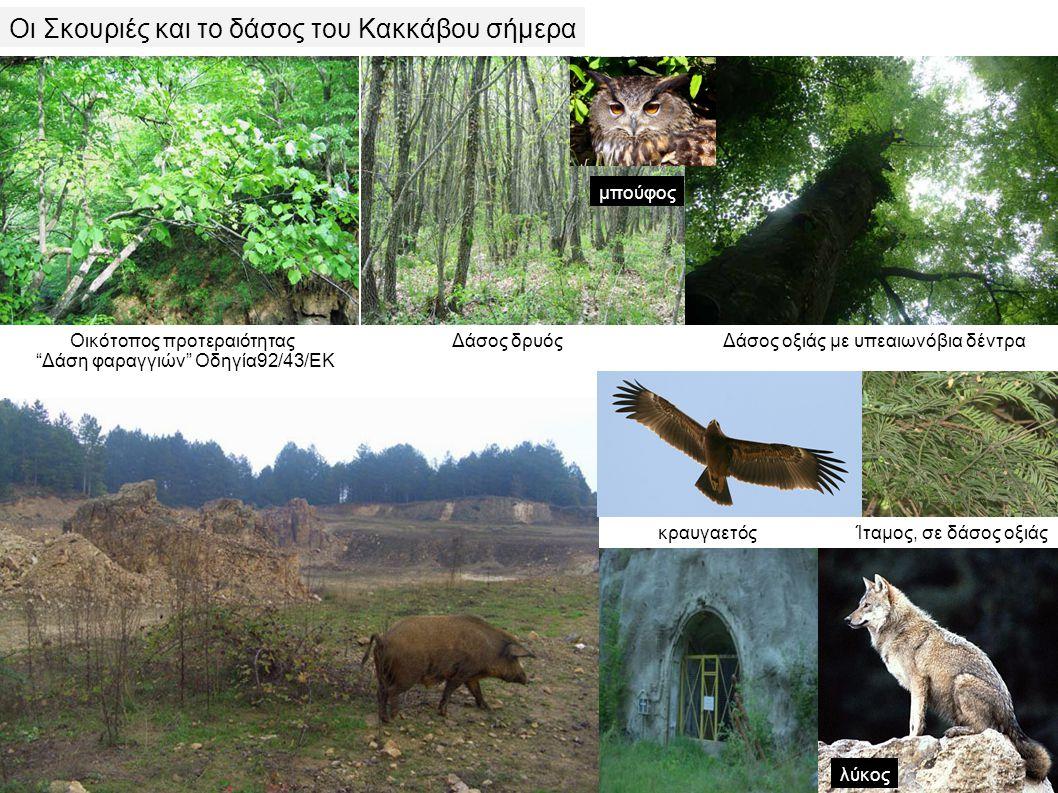 Οικότοπος προτεραιότητας Δάση φαραγγιών Οδηγία92/43/ΕΚ Δάσος δρυόςΔάσος οξιάς με υπεαιωνόβια δέντρα Ίταμος, σε δάσος οξιάςκραυγαετός μπούφος λύκος Οι Σκουριές και το δάσος του Κακκάβου σήμερα