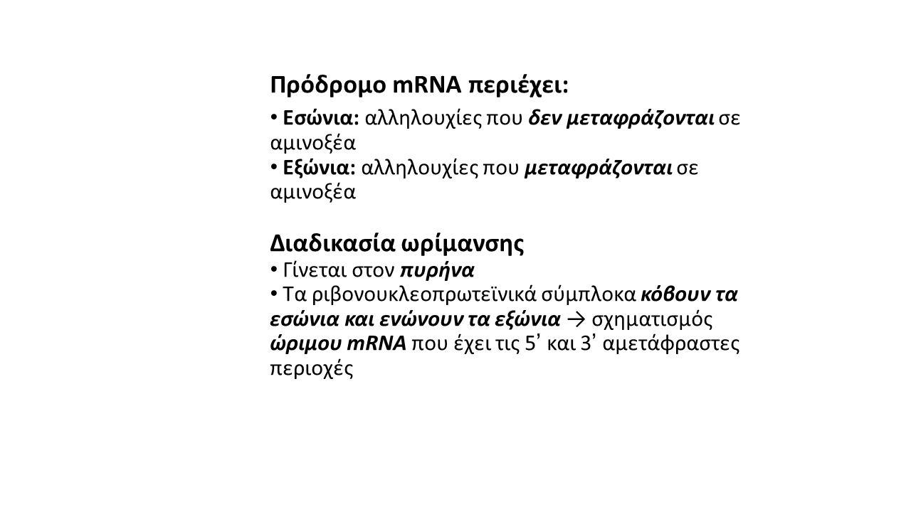 Πρόδρομο mRNA περιέχει: • Εσώνια: αλληλουχίες που δεν μεταφράζονται σε αμινοξέα • Εξώνια: αλληλουχίες που μεταφράζονται σε αμινοξέα Διαδικασία ωρίμανσ