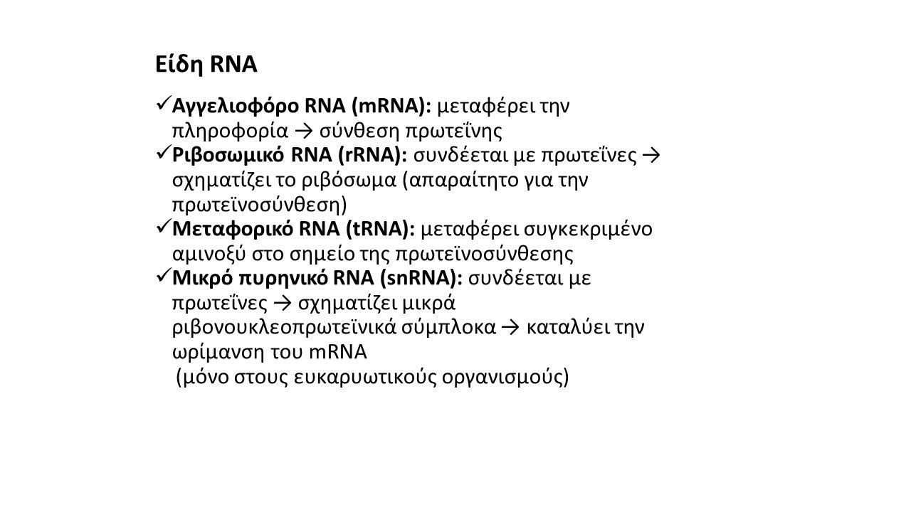 Είδη RNA  Αγγελιοφόρο RNA (mRNA): μεταφέρει την πληροφορία → σύνθεση πρωτεΐνης  Ριβοσωμικό RNA (rRNA): συνδέεται με πρωτεΐνες → σχηματίζει το ριβόσω