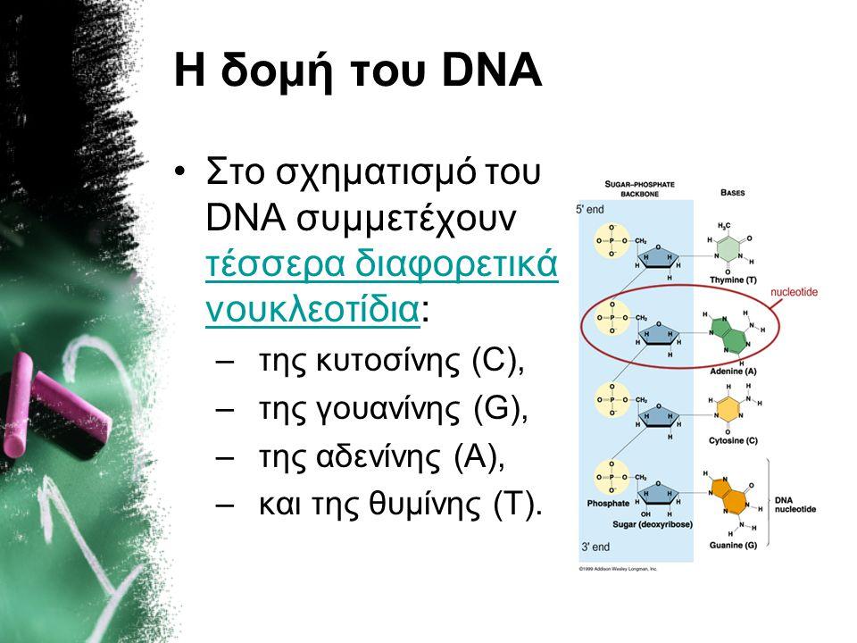 Η δομή του DNA •Στο σχηματισμό του DNA συμμετέχουν τέσσερα διαφορετικά νουκλεοτίδια: τέσσερα διαφορετικά νουκλεοτίδια –της κυτοσίνης (C), –της γουανίν