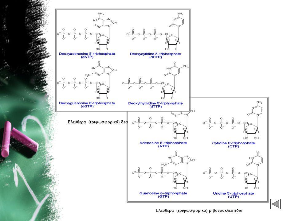 Ελεύθερα (τριφωσφορικά) δεσοξυριβονουκλεοτίδια Ελεύθερα (τριφωσφορικά) ριβονουκλεοτίδια