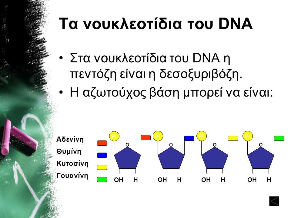 Τα νουκλεοτίδια του DNA •Στα νουκλεοτίδια του DNA η πεντόζη είναι η δεσοξυριβόζη. •Η αζωτούχος βάση μπορεί να είναι: Αδενίνη Θυμίνη Κυτοσίνη Γουανίνη