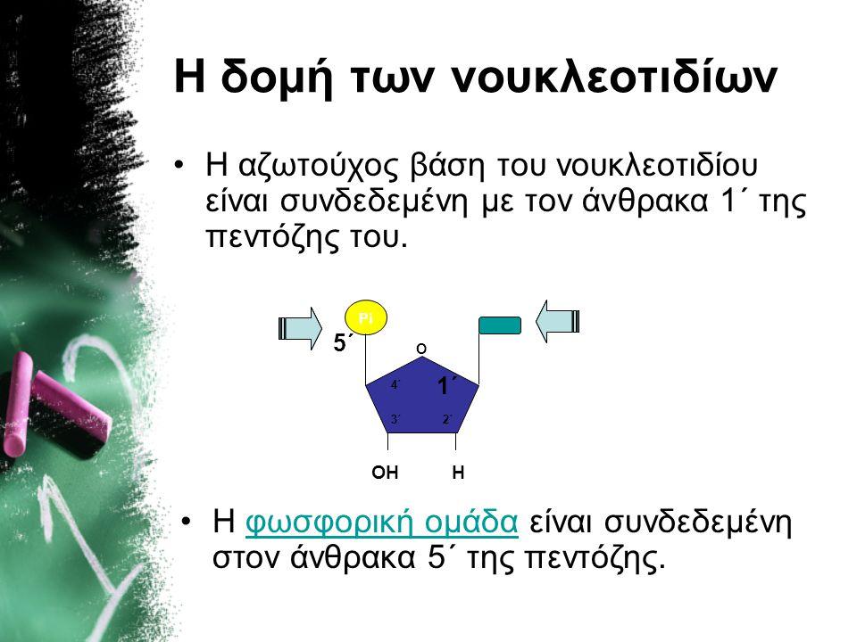 Η δομή των νουκλεοτιδίων •Η αζωτούχος βάση του νουκλεοτιδίου είναι συνδεδεμένη με τον άνθρακα 1΄ της πεντόζης του. Pi 5΄ O ΟΗΗ 1΄ 2΄3΄ 4΄ •Η φωσφορική