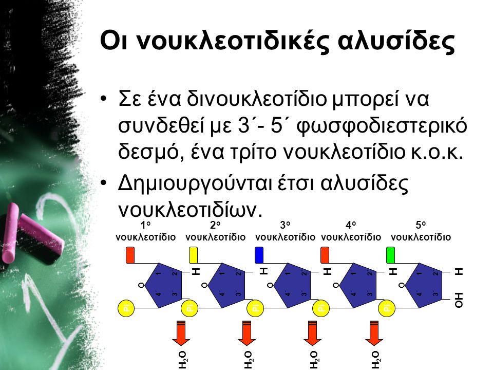 Οι νουκλεοτιδικές αλυσίδες •Σε ένα δινουκλεοτίδιο μπορεί να συνδεθεί με 3΄- 5΄ φωσφοδιεστερικό δεσμό, ένα τρίτο νουκλεοτίδιο κ.ο.κ. •Δημιουργούνται έτ