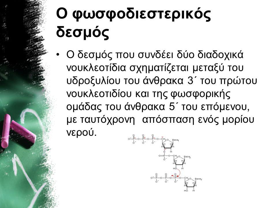 Ο φωσφοδιεστερικός δεσμός •Ο δεσμός που συνδέει δύο διαδοχικά νουκλεοτίδια σχηματίζεται μεταξύ του υδροξυλίου του άνθρακα 3΄ του πρώτου νουκλεοτιδίου