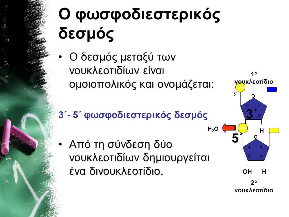 Ο φωσφοδιεστερικός δεσμός •Ο δεσμός μεταξύ των νουκλεοτιδίων είναι ομοιοπολικός και ονομάζεται: 3΄- 5΄ φωσφοδιεστερικός δεσμός •Από τη σύνδεση δύο νου