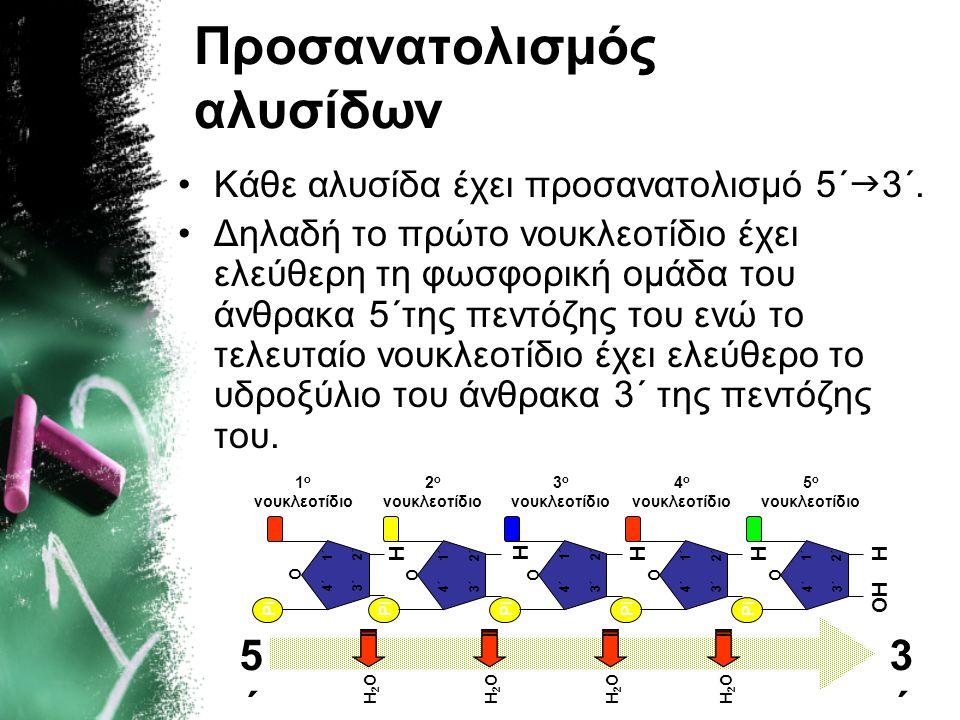Προσανατολισμός αλυσίδων •Κάθε αλυσίδα έχει προσανατολισμό 5΄  3΄. •Δηλαδή το πρώτο νουκλεοτίδιο έχει ελεύθερη τη φωσφορική ομάδα του άνθρακα 5΄της π