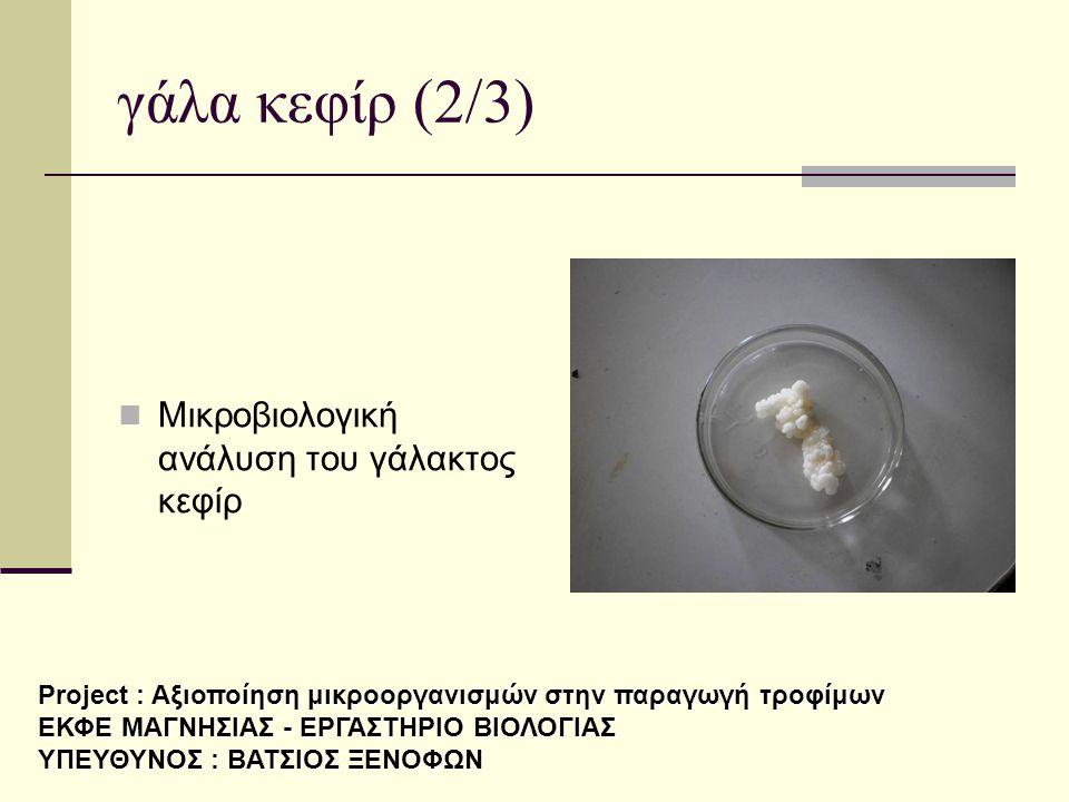 γάλα κεφίρ (2/3)  Μικροβιολογική ανάλυση του γάλακτος κεφίρ Project : Αξιοποίηση μικροοργανισμών στην παραγωγή τροφίμων ΕΚΦΕ ΜΑΓΝΗΣΙΑΣ - ΕΡΓΑΣΤΗΡΙΟ Β